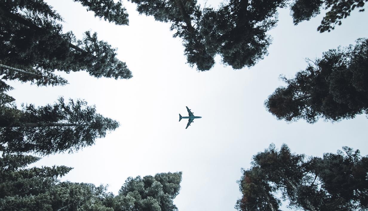imagem de avião voando em meio a arvores