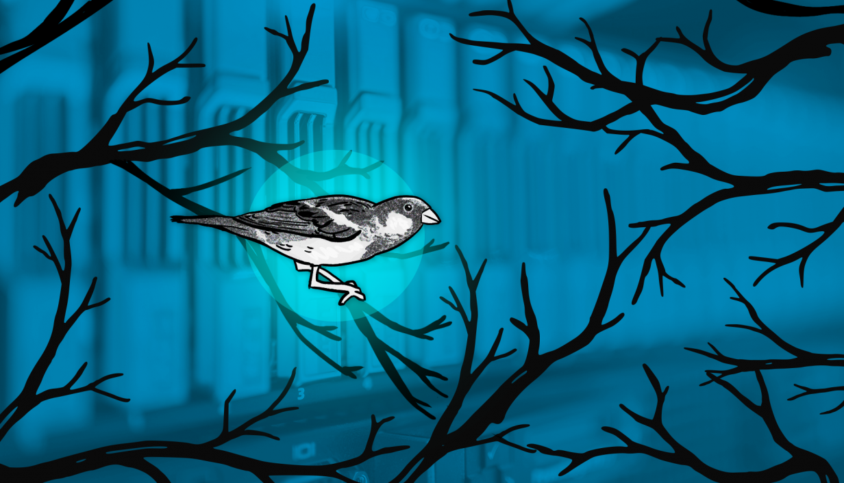 A drawing of a silver sparrow.